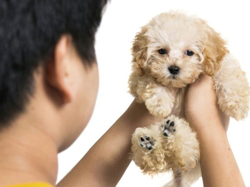 Preparing a contract for puppy buyers social