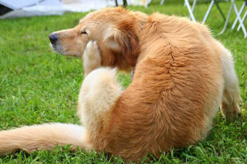 how to remove tick from dog