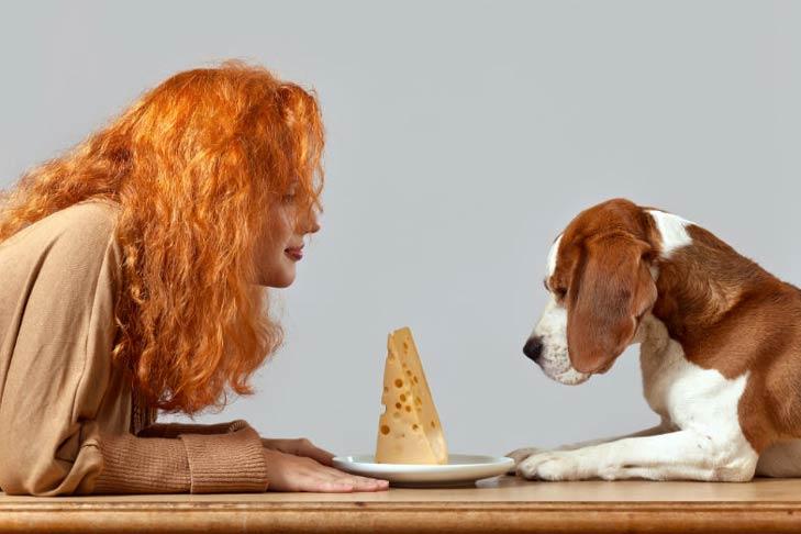 Beagle woman and cheese