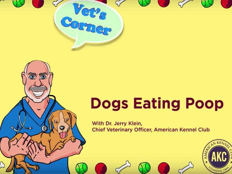 Preventing Dogs from Eating Poop