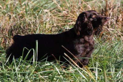 hunting dog names hero