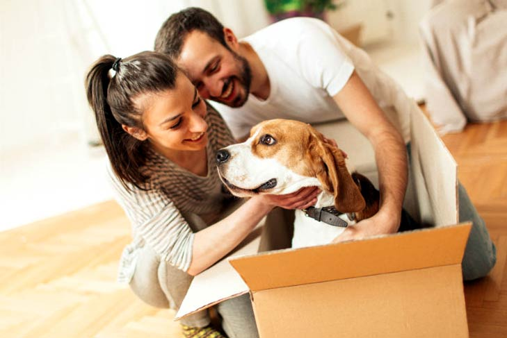 Couple moving with a beagle