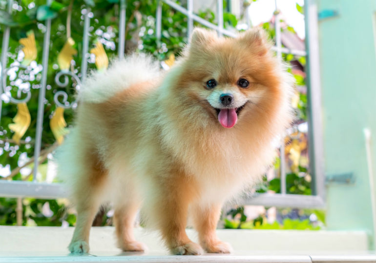 Small Dog Breeds Looks Like