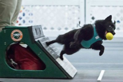 moby flyball