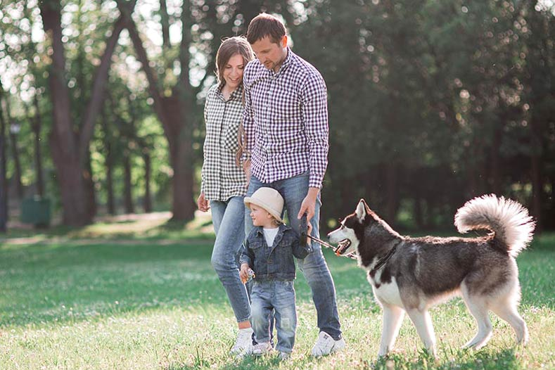 Family with a young boy walking a Siberian Husky