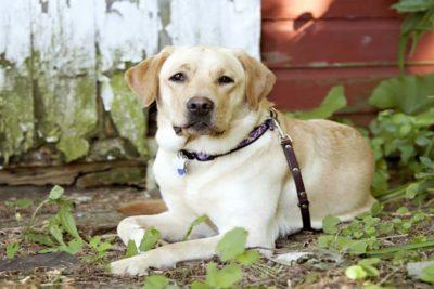 barndog_hero