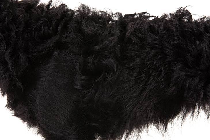 Mudi coat detail