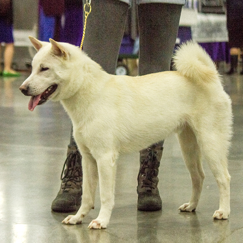 Pictures Of All Akc Dog Breeds