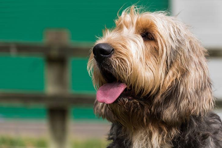 Ottherhound