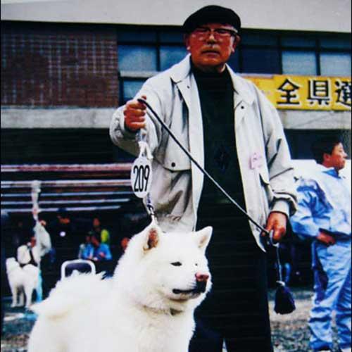 Akita History