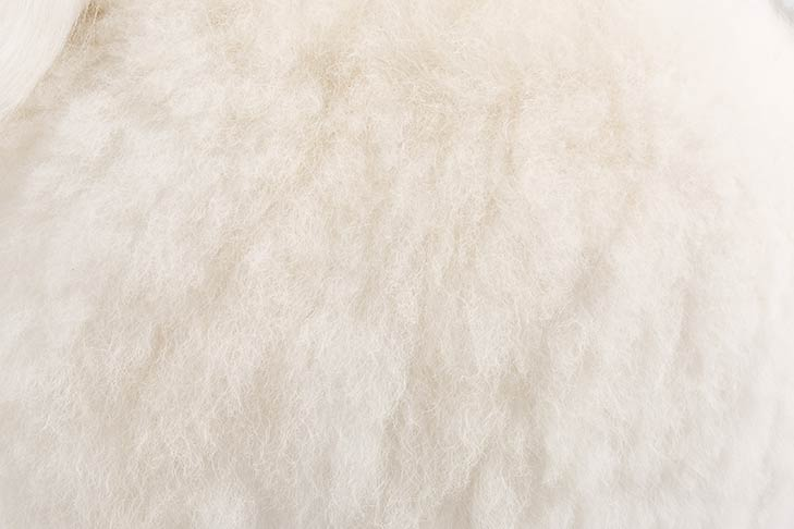 White-colored Poodle coat detail