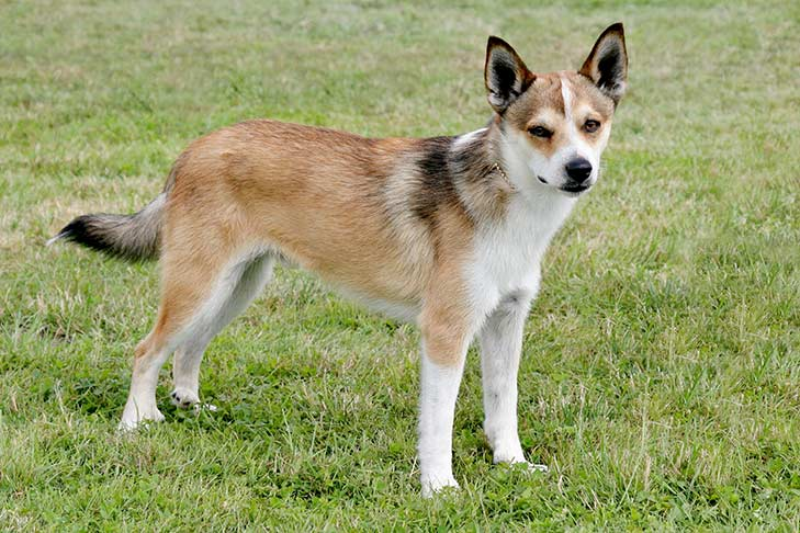 Dog Breed I