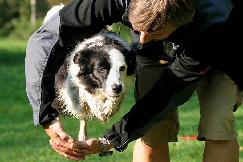 Trick Dog Jumping Through Arms