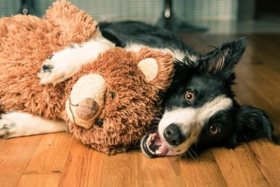 Bordercollie-toy-header