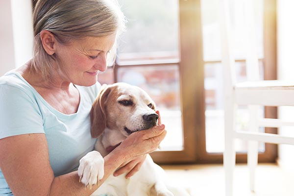 beagle-with-owner