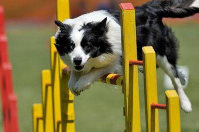 agility-header