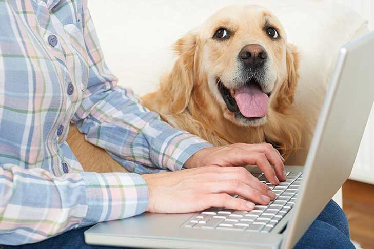 golden-retriever-with-owner-laptop-header