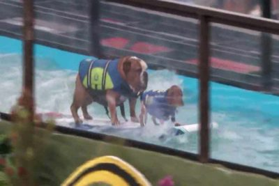 surfing dogs header optimized