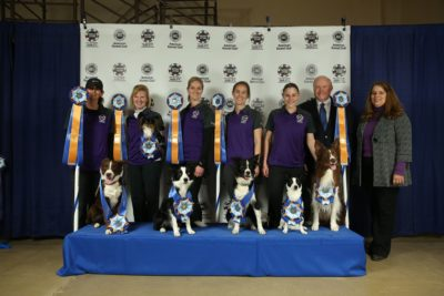 national agility champions