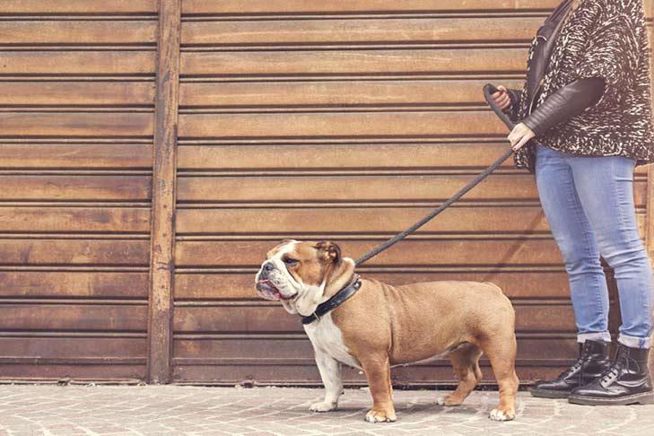 bulldog-on-leash-with-woman-dogwalker-header