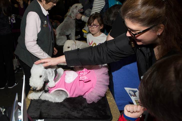 Bedlington Terrier Meet the Breeds