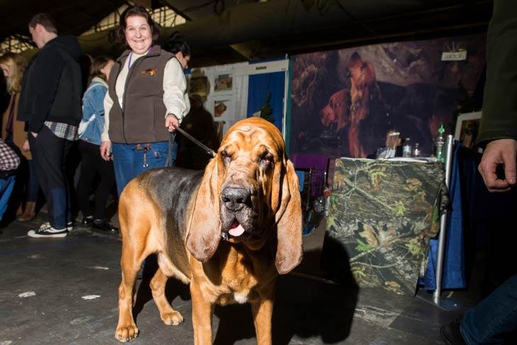 Bloodhound Meet the Breeds