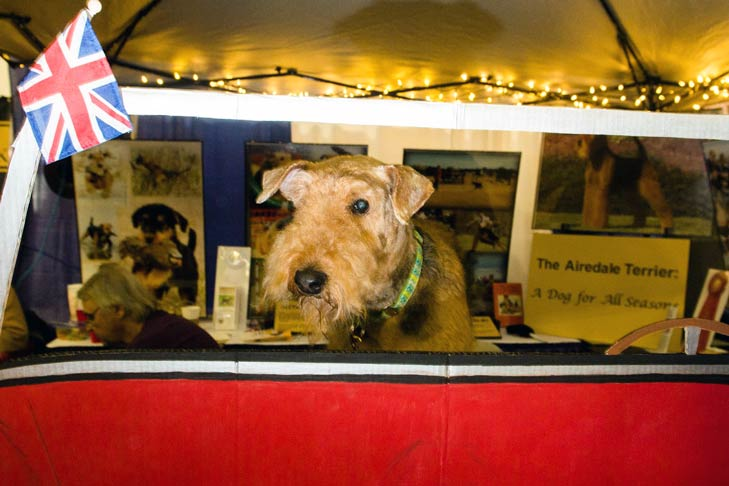Airedale Terrier Meet the Breeds