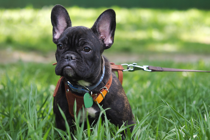Best Breed Dog Ranks