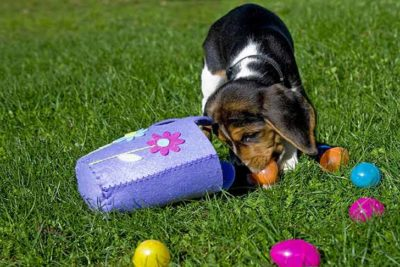 beagle-puppy-easter-egg-hunt-header