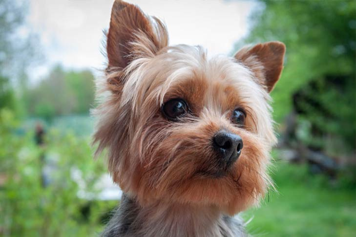 All Kinds Of Small Breed Dogs