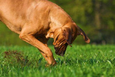 why do dogs bury bones