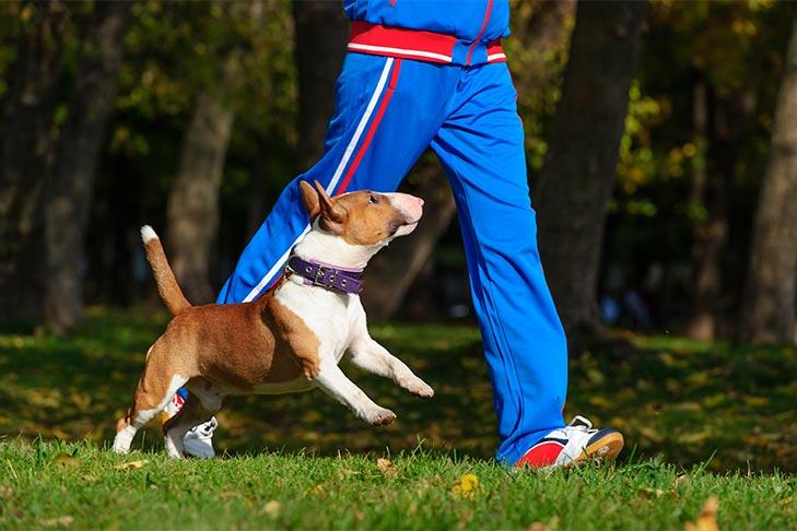 狗神话被揭穿:狗可以在后院得到他们需要的所有运动吗?