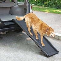 在阵亡将士纪念日与您的狗一起旅行?打包这些要点