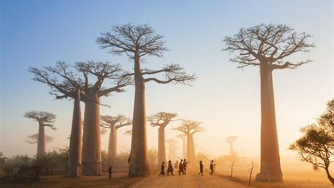 A ilha de Madagascar se desenvolveu de maneira esplêndida