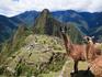 Aventuras latino-americanas para toda a família