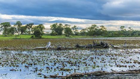 Pantanal: a um passo de Cuiabá