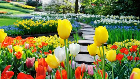 Flores do Keukenhof