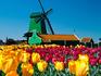 Campo e moinho holandeses
