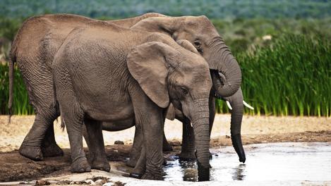 Elefantes no Addo Elephant National Park, África do Sul