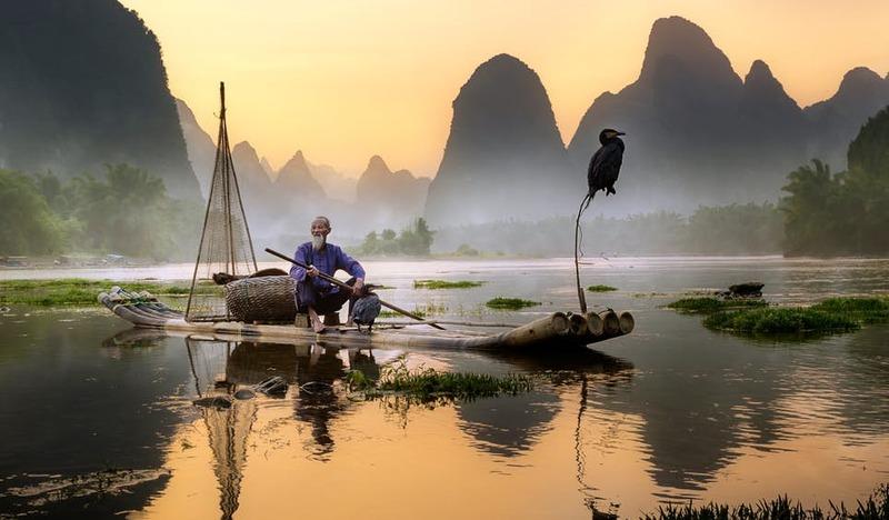 A antiga prática da pesca com cormorões, na qual os pássaros pegam peixes muito grandes para engolir, ainda pode ser vista em algumas partes da China