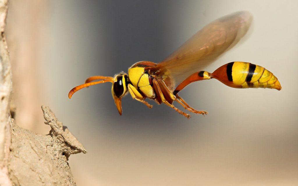 wasp4