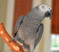 Nigel the Parrot