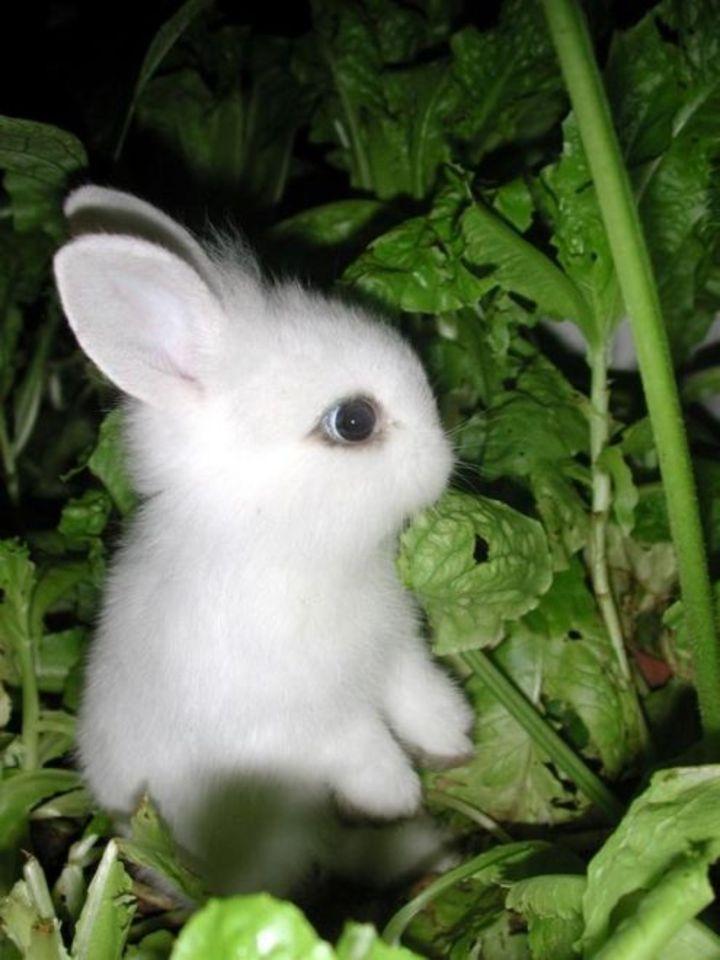 عکس بارداری خرگوش