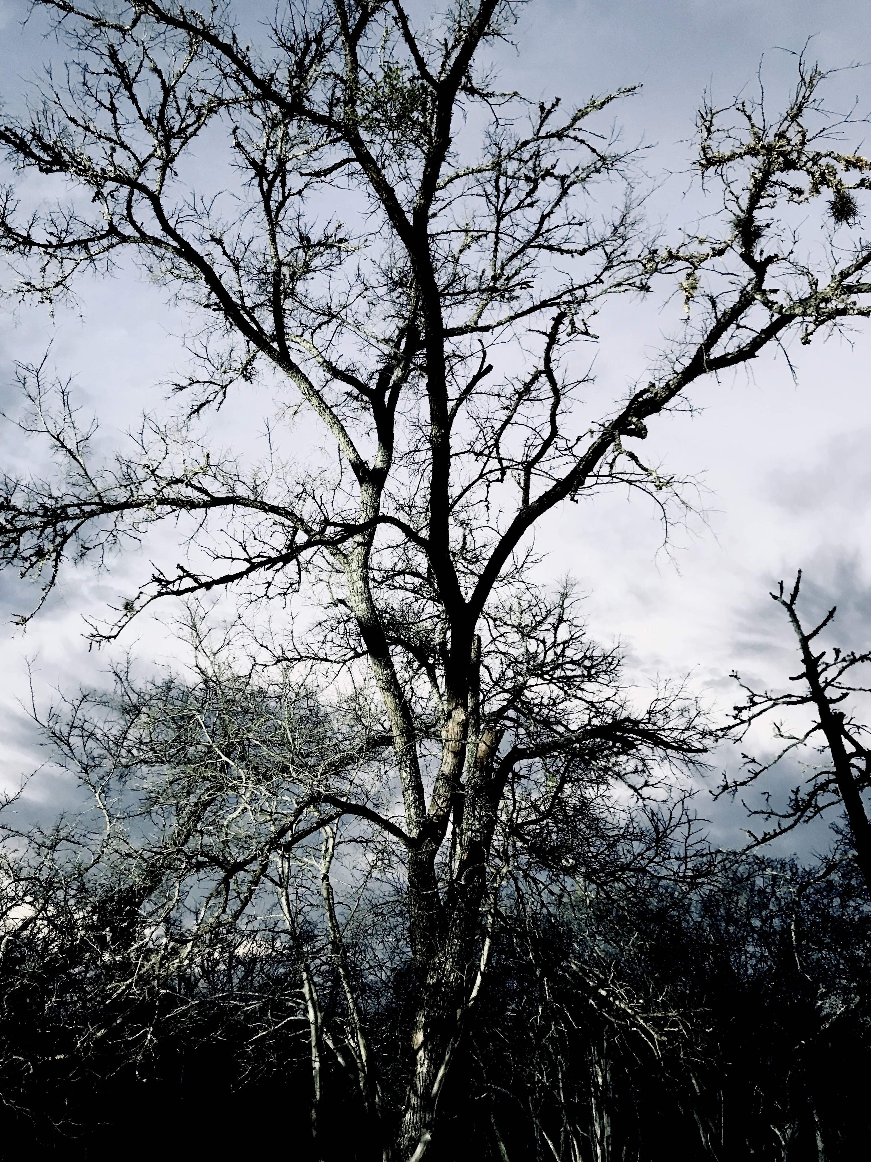1413501-1520271506144-tree2.jpg
