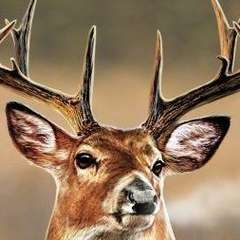 Cabela's Trophy Bucks