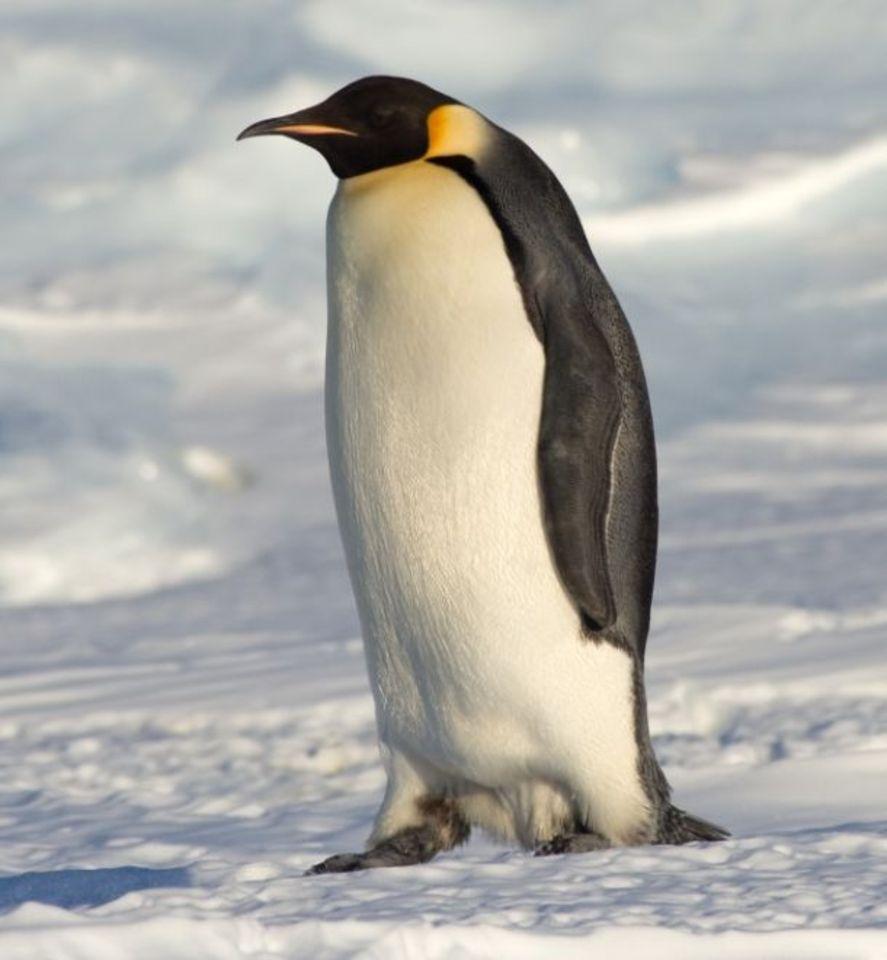 Fotos concentracion pinguinos 2012 77