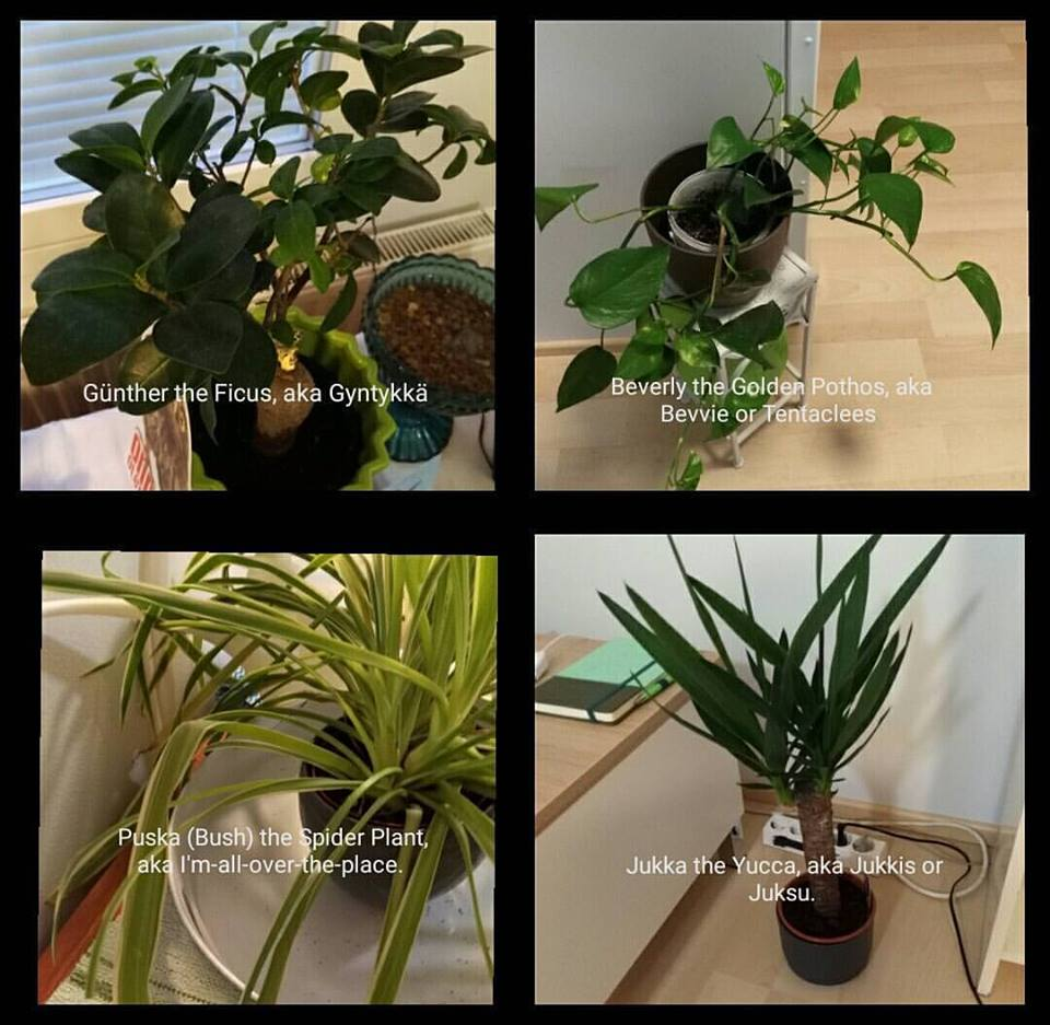 3049589-1504288020366-houseplants.jpg