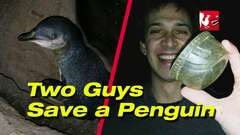 Two Guys Save a Penguin