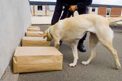 Federal case on drug dogs