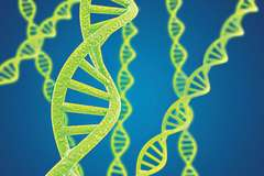 Researchers isolated two age-controlling genes in humans